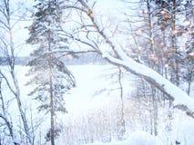 Träumerisches und abstraktes Winterlandschaftsfoto Funkelnüberlagerung Stockbild