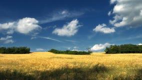 Träumerisches Weizenfeld mit Bäumen und Wolken stockfotos