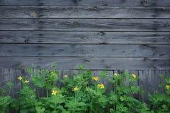 Trävägg med gula smörblommablommor royaltyfri fotografi