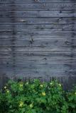 Trävägg med gula smörblommablommor royaltyfri foto
