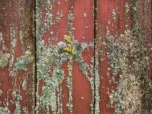 Träväggen texturerar Fotografering för Bildbyråer