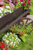 Trävagn med färgrika blommor Royaltyfri Bild