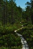 Trävandringsled i den nordliga barrskogen royaltyfria foton