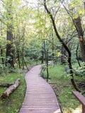 Trävandringsled i skogen royaltyfri bild