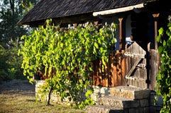 Träveranda med druvaleaves Royaltyfri Foto