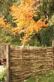 Trävide- staket i höstträdgård Arkivbilder