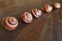 trävippning för escargotsförskjutningstabell Royaltyfri Bild
