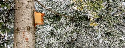Trävoljären på ett träd i skogen för vinterunderlandberget med den månghundraåriga granen och sörjer i de österrikiska fjällängar royaltyfria foton