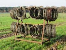 Tråd för nederländska haricot vert Arkivbilder