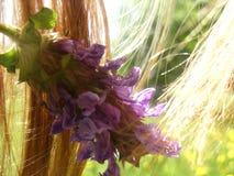 Tråd, kronblad och glödtråd Arkivbild