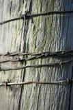 Trådar av den rostiga taggen binder på en staketstolpe royaltyfria foton