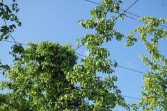 Trådar för flygturträdgård Royaltyfri Foto
