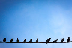 Trådfåglar Arkivbild