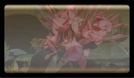 Tråkig bakgrundsmall för abstrakt natur för websiten, abstrakt design för informationsdiagrammall royaltyfri illustrationer