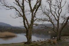Tråkig dag vid sjön i vinter - kala träd, reflexioner, änder, låga berg royaltyfri foto