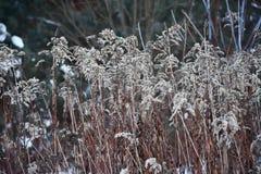 Tråkigt gräs i vinter mot skogen arkivbild