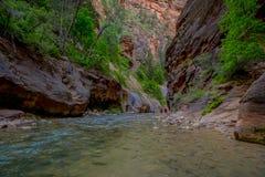 Trånga passet och den jungfruliga floden i Zion National Park lokaliserade i det sydvästligt av Förenta staterna, nära Springdale royaltyfri fotografi