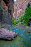 Trånga passet och den jungfruliga floden i Zion National Park lokaliserade i det sydvästligt av Förenta staterna, nära Springdale royaltyfria bilder