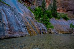 Trånga passet och den jungfruliga floden i Zion National Park lokaliserade i det sydvästligt av Förenta staterna, nära Springdale arkivbild
