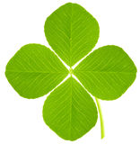 Trèfle de quatre feuilles Photos libres de droits