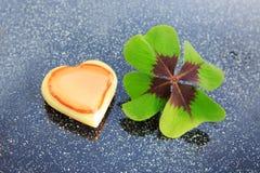 Trèfle frais chanceux de feuille du vert quatre sur le fond gris Image stock
