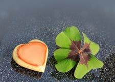 Trèfle frais chanceux de feuille du vert quatre sur le fond gris Photo libre de droits