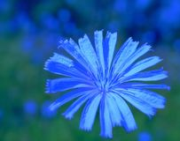 Très bleu Image stock
