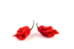 très fortement piment Carolina Reaper images stock