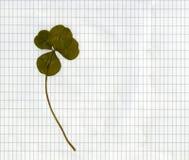 Trébol cuatro-con hojas presionado Foto de archivo libre de regalías
