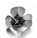 Trébol de cuatro hojas blanco y negro Foto de archivo libre de regalías