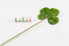 Trébol de cuatro hojas con palabra afortunada Imagen de archivo
