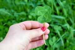 Trébol de cuatro hojas en la mano de la mujer, símbolo de la buena suerte Fotos de archivo libres de regalías