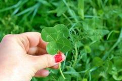 Trébol de cuatro hojas en la mano para mujer, símbolo de la buena suerte Fotografía de archivo libre de regalías