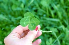 Trébol de cuatro hojas en la mano para mujer, símbolo de la buena suerte Fotos de archivo