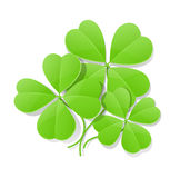 Trébol de cuatro hojas para el día de San Patricio Fotografía de archivo libre de regalías
