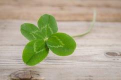 Trébol de cuatro hojas para la buena suerte imagen de archivo libre de regalías