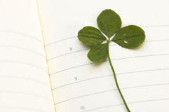 Trébol de cuatro hojas y nuevo día Imágenes de archivo libres de regalías