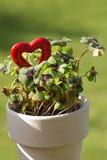 Trébol de cuatro hojas y un corazón rojo Imagen de archivo