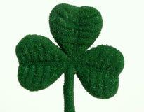 Trébol del día del St. Patricks Imagenes de archivo