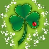 Trébol del St Patrick con el ladybug Imagenes de archivo