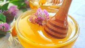 Trébol fresco de la flor de la miel metrajes