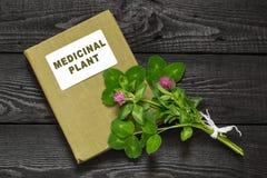 Trébol rojo (pratense del Trifolium) y planta medicinal del directorio Fotografía de archivo libre de regalías