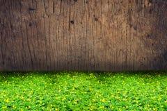Trébol verde y flor amarillo con el fondo de madera de la textura Fotografía de archivo
