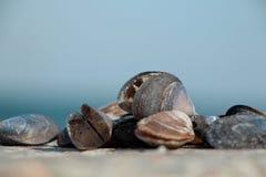 Trésors de mer Photo libre de droits
