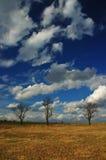 Três árvores Imagem de Stock Royalty Free