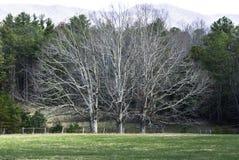 Três árvores Fotos de Stock Royalty Free