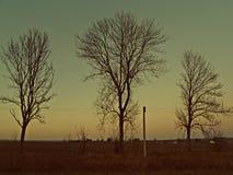 Três árvores Foto de Stock