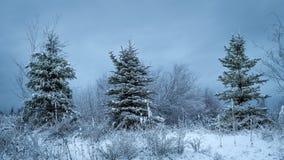 Três árvores de Natal perfeitas em seguido com as cores frescas de w imagens de stock royalty free