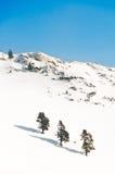 Três árvores em uma montanha branca no inverno Imagem de Stock Royalty Free