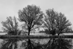 Três árvores no lago com reflexão na água Imagem de Stock